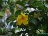 W Joya de Ceren; Salwador