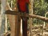 W Copan Ruinas; Honduras