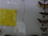 W Muzeum Motyli i Innych Insektów w La Ceiba; Honduras