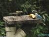 W La Fortuna; Kostaryka