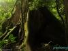 The Ceibo Tree - w Parku Narodowym Arenal Vulcano; Kostaryk