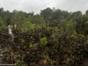 W Parku Narodowym Arenal Vulcano; Kostaryka