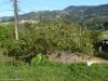 Krzak guajaby - Palmital Norte; Kostaryka