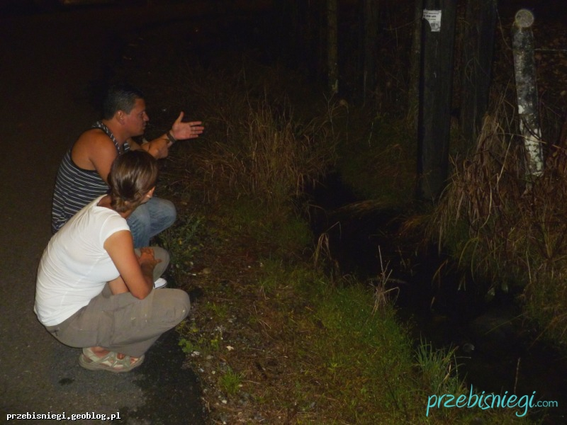 W poszukiwaniu żab :) - Río Claro; Kostaryka
