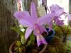W parku przy wiosce Candelaria niedaleko Concepción - podczas Świeta Orchidei; Boliwia