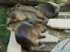 W Jardín Zoológico w Santa Cruz de la Sierra; Boliwia