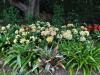 Auckland Botanic Gardens - Auckland; Nowa Zelandia
