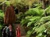 Ogród zimowy w Auckland Domain - Auckland; Nowa Zelandia