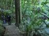 Alice Eaves Scenic Reserve (Eaves Bush) w Orewa; Nowa Zelandia