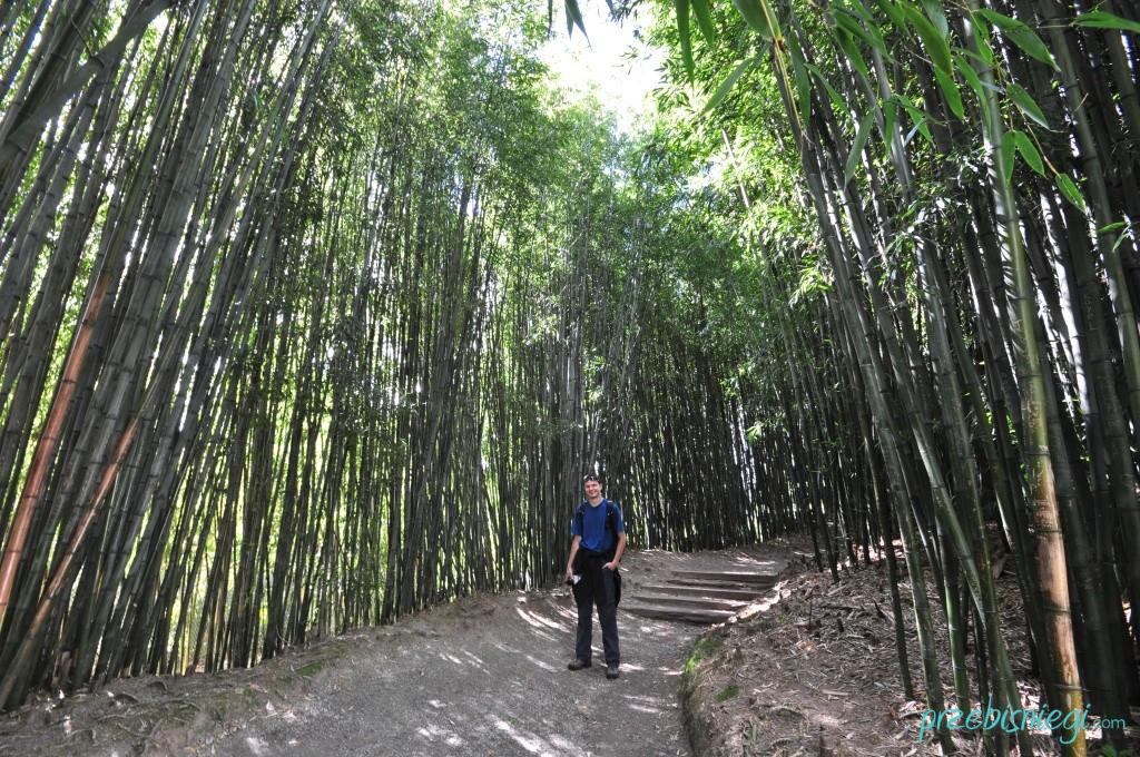 Bambusy w chińskim ogrodzie w Hamilton Gardens - Hamilton; Nowa Zelandia