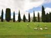 Cmentarz obok Hamilton Gardens - Hamilton; Nowa Zelandia